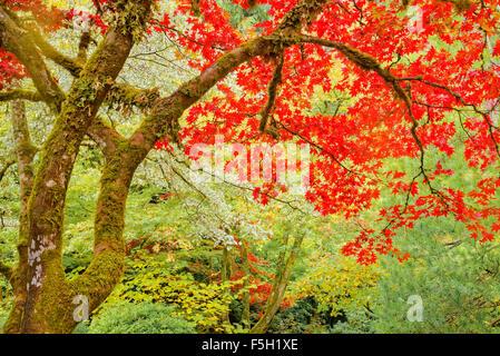 Japanischer Garten, Butchart Gardens, Brentwood Bay, Vancouver Island, British Columbia, Kanada - Stockfoto