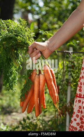 Mitte erwachsenen Frau im Garten halten Bund Karotten, Fokus auf Seite - Stockfoto