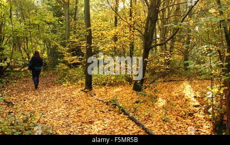 Eine Frau geht über einen Pfad durch den Wald in Stanmore Country Park, in der Nähe von Wood Lane, Stanmore, London, - Stockfoto
