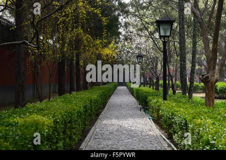 Von Bäumen gesäumten Weg Frühling Kirschblüte Forsythien weiße gelbe ...