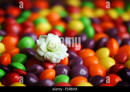 Kleine weiße Blume sitzt auf einem Bett aus bunten Süßigkeiten - Stockfoto