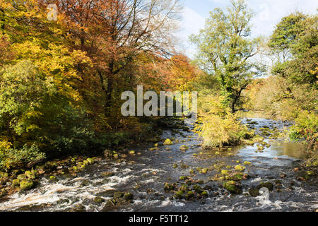 "Herbstfarben in ""Strid Wood"" (2), Bolton Abbey, Yorkshire Dales National Park, England, UK - Stockfoto"