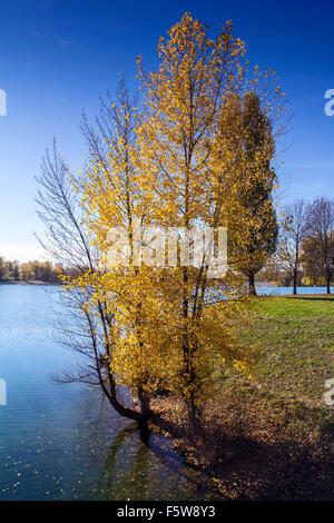 Bunte Blätter auf den Bäumen entlang See im Herbst - Stockfoto