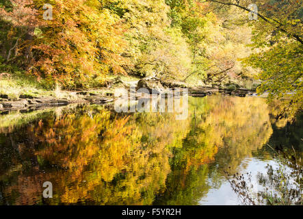 "Herbstfarben in ""Strid Wood"" (3), Bolton Abbey, Yorkshire Dales National Park, England, UK - Stockfoto"