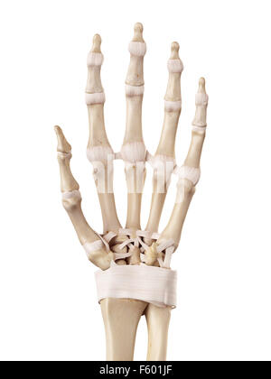 Die Bänder der hand Stockfoto, Bild: 13171965 - Alamy
