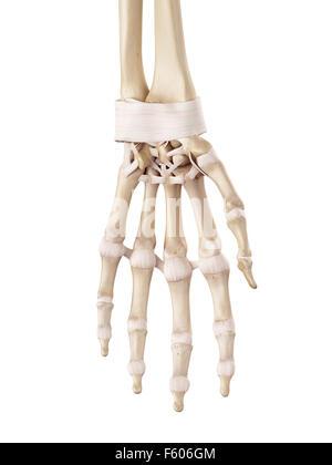 Die Bänder der hand Stockfoto, Bild: 13175043 - Alamy