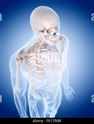 medizinisch genaue Abbildung des menschlichen Skeletts - den Oberkörper - Stockfoto