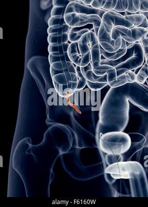 Anhang-Schmerz-Illustration Stockfoto, Bild: 104786892 - Alamy