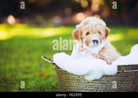 Liebenswerter niedlicher junger Welpe draußen auf dem Hof Baden bedeckt in Seifenwasser Bläschen - Stockfoto