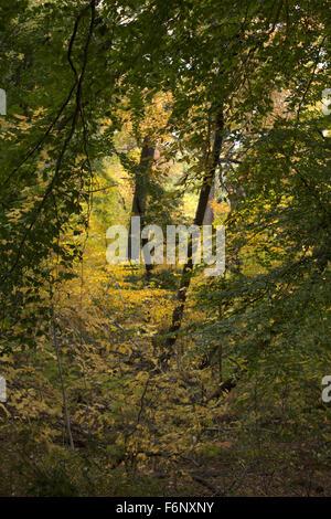 Herbstfarben im Prospect Park in Brooklyn, New York. - Stockfoto