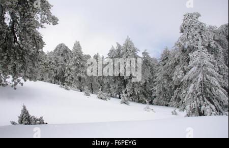 Winter Landschaft Gebirge mit Wald bedeckt mit Schnee. Troodos-Gebirge auf Zypern - Stockfoto