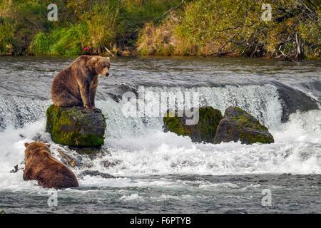 Ein Junge männliche Braunbären sitzt auf einem der Felsen von Brooks Falls als er bereitet sich auf seinen Angelplatz - Stockfoto