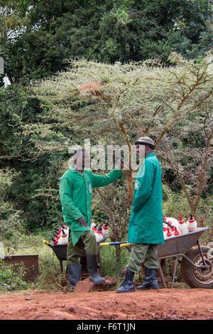 Zwei Wächter an, Sheldrick Elephant Orphanage mit Schubkarren voller Milchflaschen für die verwaisten Elefanten, - Stockfoto