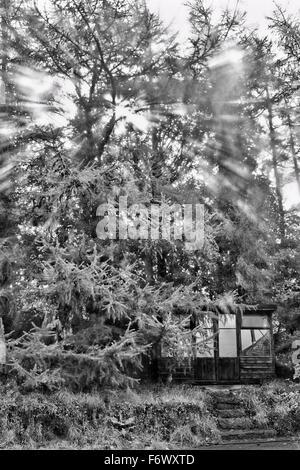 Ein Sommerhaus, eingebettet in den Bäumen - Stockfoto