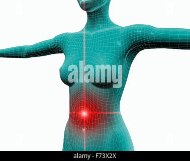 Allgemeine Anatomie Dickdarm Stockfoto, Bild: 100083999 - Alamy