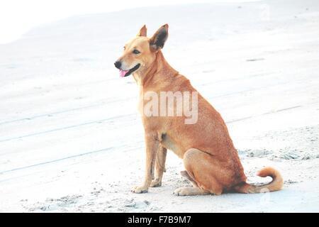 Ein Hund der Fishermans Colva Beach in Goa Indien - Stockfoto