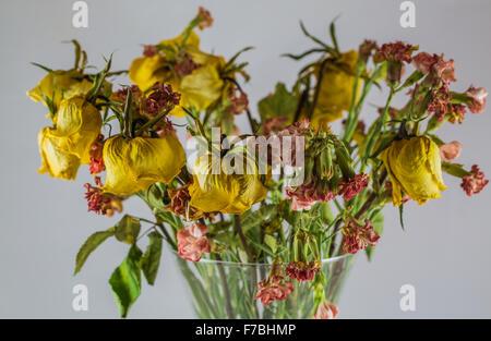 trockene gelbe Rosen in einer Vase auf einem weißen Hintergrund - Stockfoto