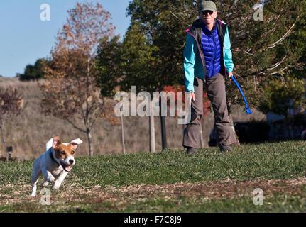 Ball mit einem Jack Russell abrufen - Stockfoto