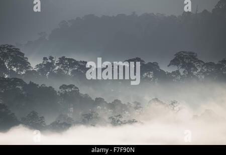 Nebel steigt im Morgengrauen über Danum Valley, Sabah, Malaysia - Stockfoto