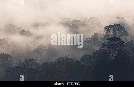 Am frühen Morgen Nebel steigt in den tropischen Regenwald, Danum Valley, Sabah, Malaysia - Stockfoto
