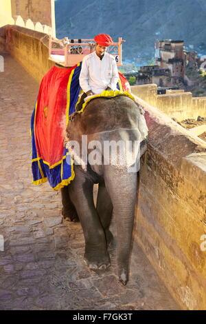 Mahout und seinen Elefanten (Elephas Maximus) auf dem Weg zurück von Amber Fort in Jaipur, Rajasthan, Indien, Asien - Stockfoto