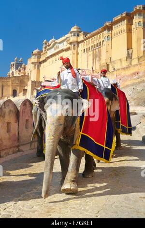 Indien-Elefant (Elephas Maximus) Rückkehr von Amber Fort in Jaipur, Rajasthan, Indien - Stockfoto
