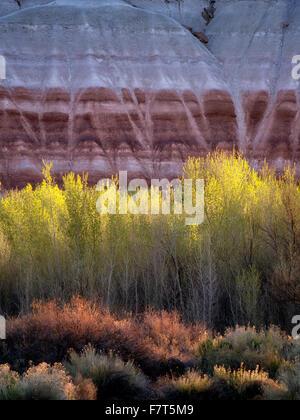 Pappeln und bunten Klippen. Capitol Reef National Park, Utah - Stockfoto