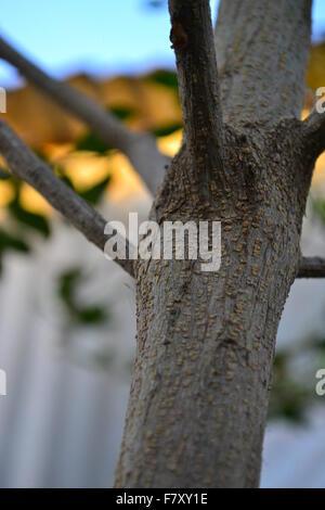 Closeup Stamm eines jungen Baums - Stockfoto