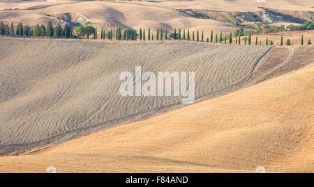 Italien-Tuscany-Le-Kreta - Landwirtschaft und Zypressen - Stockfoto
