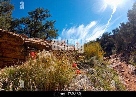 Die vielen Farben des Cedar Mesa sind immer noch lebendig in Mitte Oktober. Das Gebiet ist für ein neues nationales - Stockfoto