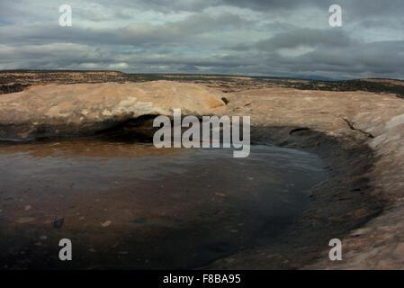 Voller Frische Regenwasser, sitzt ein Schlagloch auf Todie Canyon in Utah Cedar Mesa. - Stockfoto