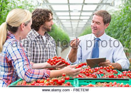 Geschäftsmann mit digital-Tablette und Züchter Inspektion Reifen Rotwein Tomaten im Gewächshaus - Stockfoto