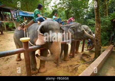 Thailand - Khao Lak Nationalpark, Elefanten warten auf Touristen - Stockfoto