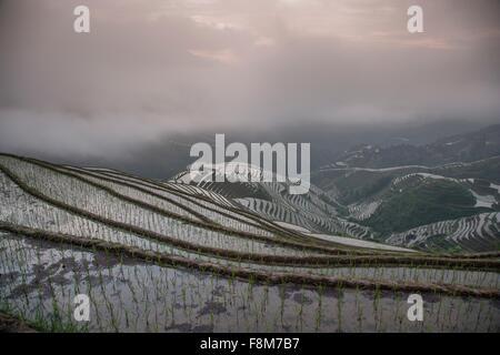 Erhöhten Blick auf Reisfelder bei Longsheng terrassierten Reisfelder, Guangxi Zhuang, China - Stockfoto