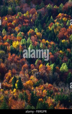 Luftaufnahme von Herbst Bäume im Wald, Salzburg, Österreich