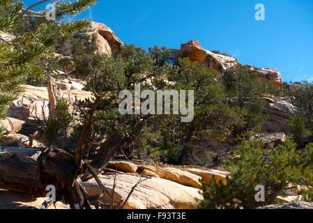 Ein Wachturm sitzt auf einem Felsvorsprung in Bullet Canyon im Cedar Mesa. Unter den ältesten Ziegel Strukturen - Stockfoto
