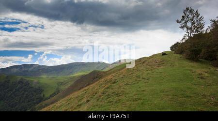 Hund liegt auf dem Hügel - Stockfoto