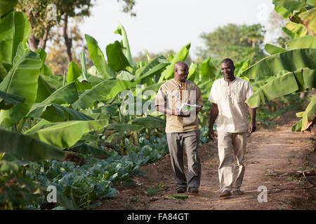 Kommerzielle Landwirte gehen durch eine Kohl und Bananen-Plantage in Sossogona, Burkina Faso. - Stockfoto