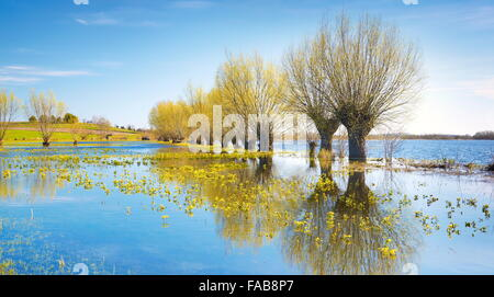 Frühlingslandschaft, Nationalpark Biebrza-Flusstal, Polen - Stockfoto
