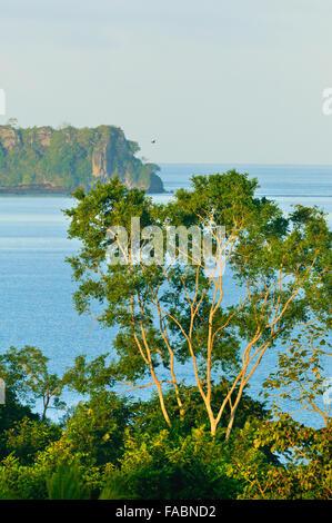 Regen Küstenwald bei Punta Patino Nature reserve, Pazifikküste, Darien Provinz, Republik von Panama. - Stockfoto