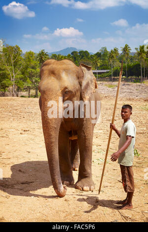 Sri Lanka - Betreuer mit seinen Elefanten, Elefanten-Waisenhaus Pinnawela (Sabaragamuwa Provinz von Sri Lanka) - Stockfoto