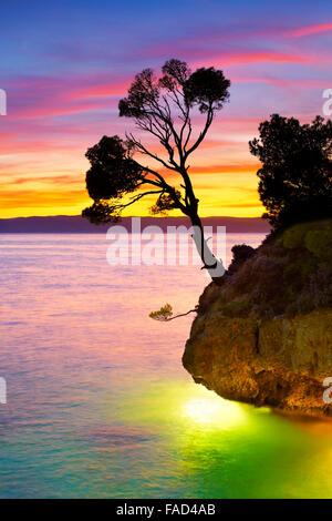 Allein einzelne Baum am Strand bei Sonnenuntergang, Landschaft der Riviera von Makarska, Kroatien Brela, - Stockfoto