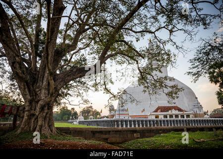Ruvanvelisaya Dagoba, heilige Stadt Anuradhapura, UNESCO World Heritage Site, Nord-Zentralprovinz in Sri Lanka Asien - Stockfoto