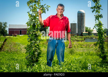 Landwirt steht in der Mitte eine große Ernte-Feld, eine Hop-Rebe mit Silos hinter ihm halten - Stockfoto