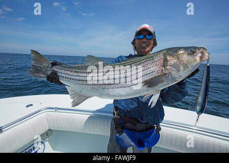Fischer hält ein frisches fing Striped Bass (Morone Inselbogens); Cape Cod, Massachusetts, Vereinigte Staaten von - Stockfoto