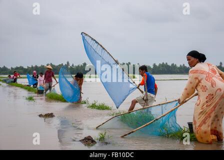 Westjava Bauern fangen Fische auf Hochwasser. © Reynold Sumayku - Stockfoto