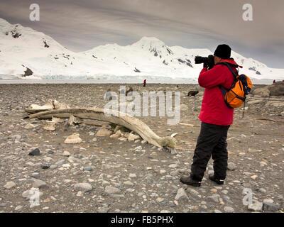 Antarktis, Süd-Shetland-Inseln, Half Moon ist, Baliza Hill, senior männlichen Fotografen in der Morgendämmerung, - Stockfoto