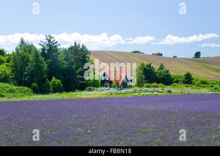 Lavendel-Feld in Biei, Hokkaido, Japan - Stockfoto