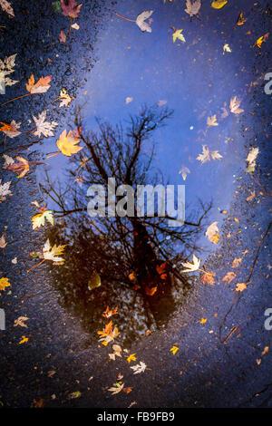 Blätter im Herbst Farben Spiegelbild in einem klarem Wasserspiegel - Stockfoto