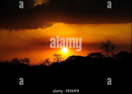 Sonnenaufgang im Serengeti Nationalpark - Stockfoto